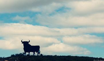 Navarra Wahrzeichen Stier
