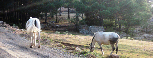 Pferde in Kastilien-Léon