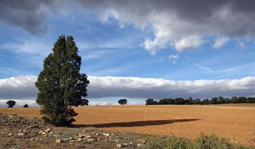 La Mancha Ciudad Real Flachland