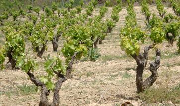 La Rioja Spanien