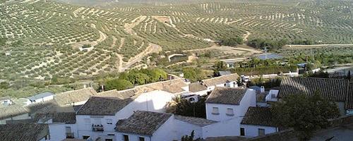 Olivenhaine in der Provinz Jaén