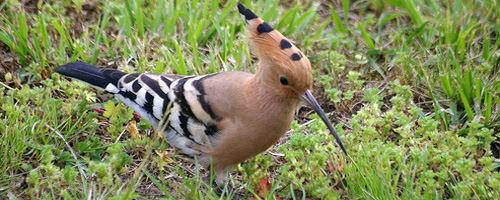 Vogelart Fauna Naturschutz